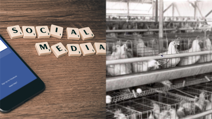 Effects of Social Media and Battery Farming Debate